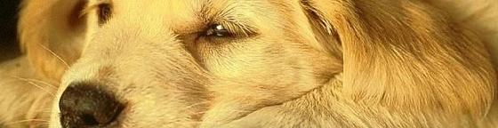 anorexia-en-los-perros